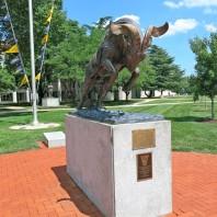 annapolis-bull