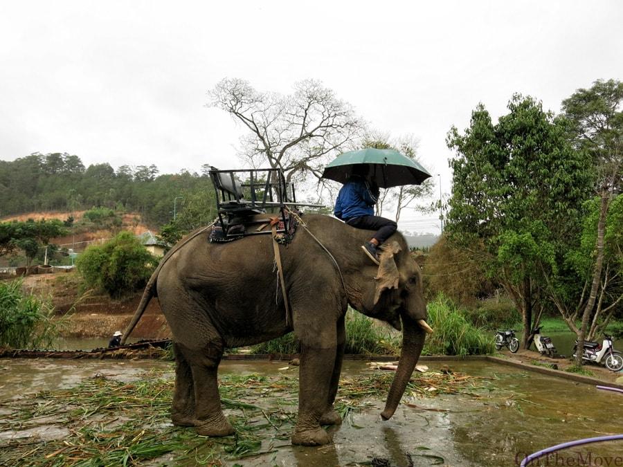 слон, elephant