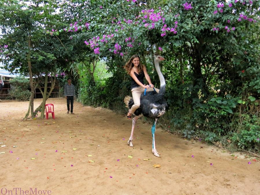 vietnam-riding_ostrich